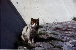 Diese Katze fristet ihre Tage als Streuner am Mittelmeer
