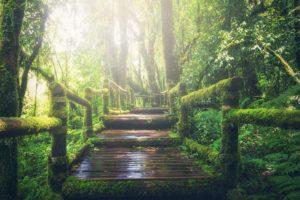 Gerade der Dschungel kann begeistern